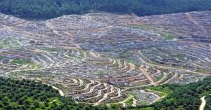 KONTROVERSI SAWIT INDONESIA